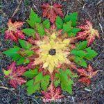 autumn danmala